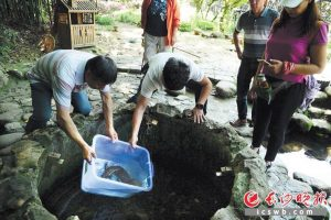 On May 23, Mr. Fan and the person in charge of Huanglongdong Scenic Area released the Andrias davidianus